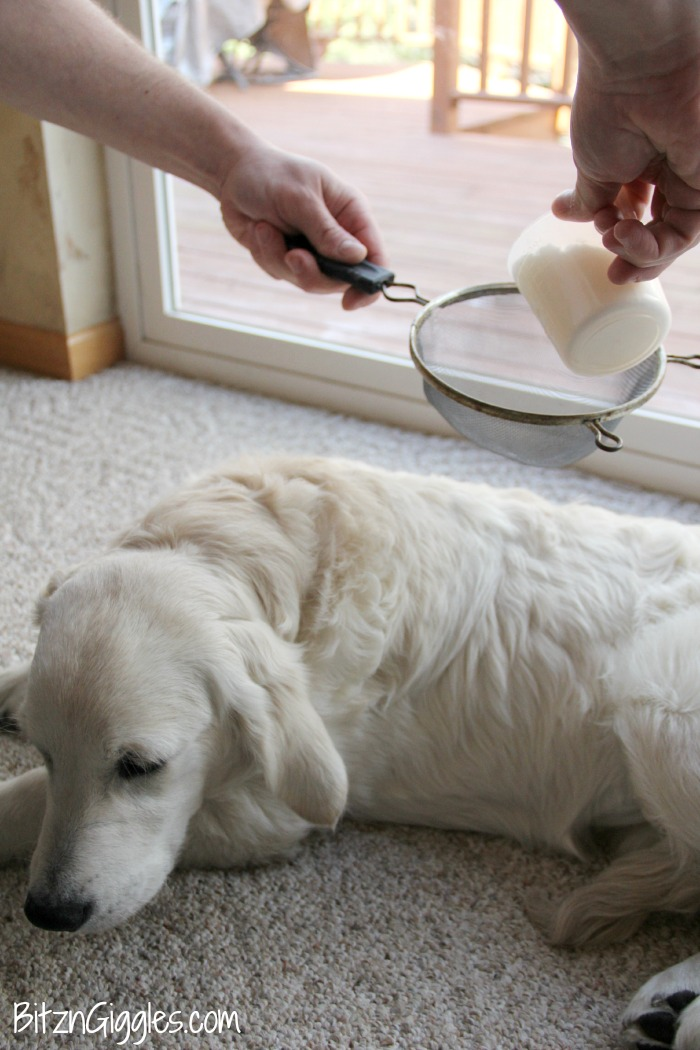 DIY Dry Dog Shampoo - Only 3 ingredients and keeps your dog smelling wonderful between baths