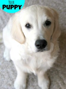 Potty Training Your Puppy #NudgeThemBack