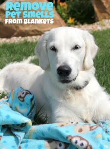 How to Remove Pet Smells From Blankets