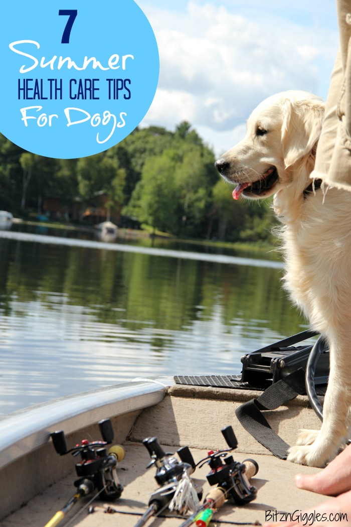 7 Summer Health Care Tips for Dogs - Great tips for keeping your dog healthy and active this summer!