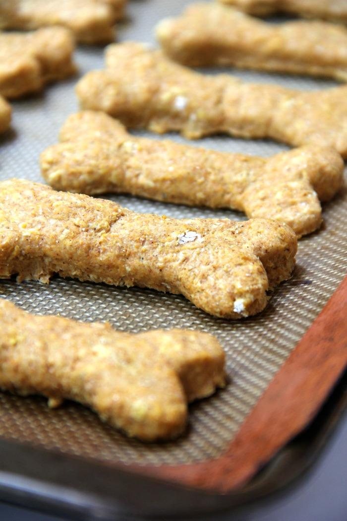 Homemade Pumpkin Oatmeal Dog Treats Bitz Giggles